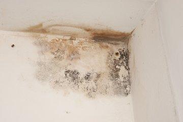 Bild von Schimmel an einer Zimmerdecke